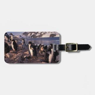 Antarctica, Adelie penguin chicks Luggage Tag