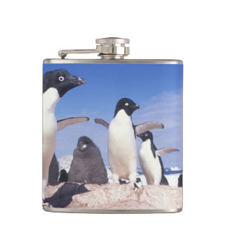 Antarctica, Adelie Penguin Pygoscelis Hip Flask