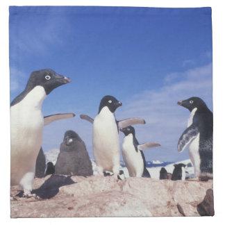 Antarctica, Adelie Penguin Pygoscelis Napkin