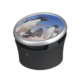 Antarctica, Adelie Penguin Pygoscelis Bluetooth Speaker