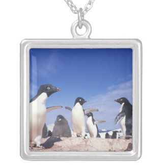 Antarctica, Adelie Penguin Pygoscelis Silver Plated Necklace
