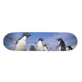 Antarctica, Adelie Penguin Pygoscelis Skate Board Deck
