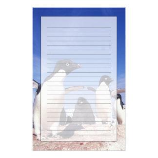 Antarctica, Adelie Penguin Pygoscelis Stationery