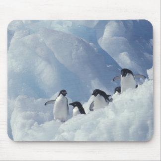 Antarctica. Adelie penguins Mouse Mat