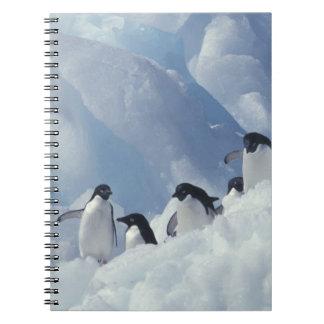 Antarctica. Adelie penguins Notebooks