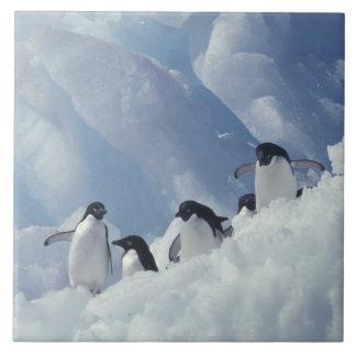 Antarctica. Adelie penguins Tile