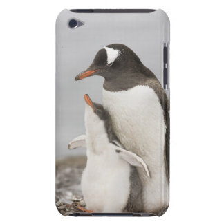 Antarctica Aitcho Island Gentoo penguin chick Case-Mate iPod Touch Case