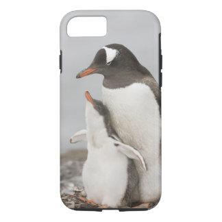 Antarctica, Aitcho Island. Gentoo penguin chick iPhone 7 Case
