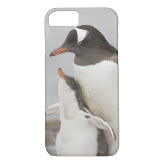Antarctica, Aitcho Island. Gentoo penguin chick iPhone 8/7 Case