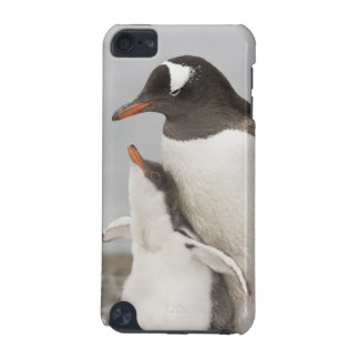 Antarctica, Aitcho Island. Gentoo penguin chick iPod Touch 5G Cover