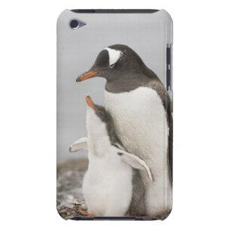 Antarctica, Aitcho Island. Gentoo penguin chick iPod Touch Case