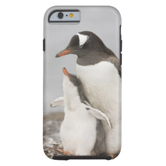 Antarctica, Aitcho Island. Gentoo penguin chick Tough iPhone 6 Case
