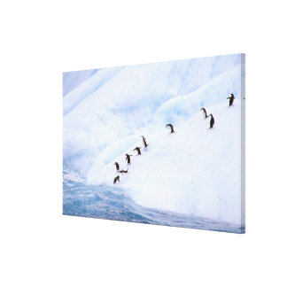 Antarctica, Antarctic Peninsula. Chinstrap Canvas Print