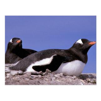 Antarctica Antarctic Peninsula Peterman Postcard