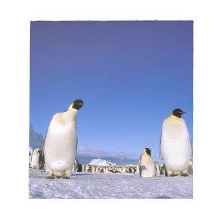 Antarctica, Antarctic Peninsula, Weddell Sea, 3 Notepad
