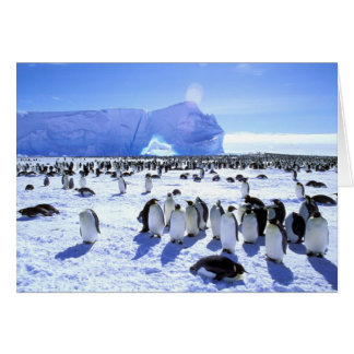 Antarctica, Antarctic Peninsula, Weddell Sea, 5 Card