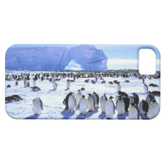 Antarctica, Antarctic Peninsula, Weddell Sea, 5 Case For The iPhone 5