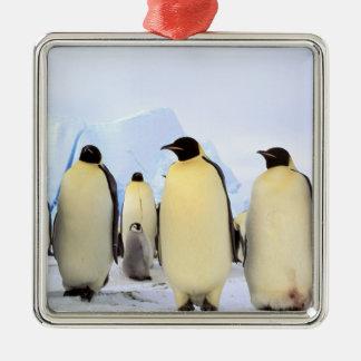 Antarctica, Antarctic Peninsula, Weddell Sea, Silver-Colored Square Decoration