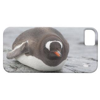 Antarctica, Antarctic Penninsula. Petermann Barely There iPhone 5 Case