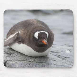 Antarctica, Antarctic Penninsula. Petermann Mouse Mat