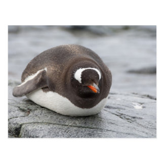 Antarctica Antarctic Penninsula Petermann Postcard