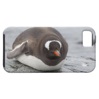 Antarctica, Antarctic Penninsula. Petermann Tough iPhone 5 Case