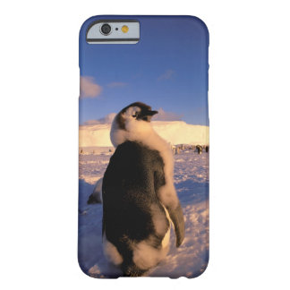 Antarctica, Australian Antarctic Territory, 2 Barely There iPhone 6 Case