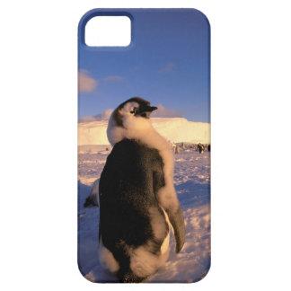 Antarctica, Australian Antarctic Territory, 2 iPhone 5 Covers