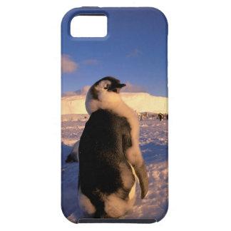 Antarctica, Australian Antarctic Territory, 2 iPhone 5 Cases