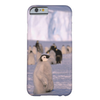 Antarctica, Australian Antarctic Territory, 3 Barely There iPhone 6 Case