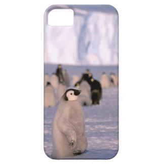 Antarctica, Australian Antarctic Territory, 3 iPhone 5 Cover