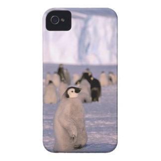 Antarctica, Australian Antarctic Territory, 3 Case-Mate iPhone 4 Cases