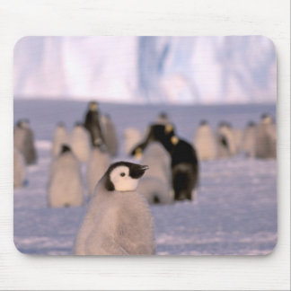 Antarctica, Australian Antarctic Territory, 3 Mouse Mat