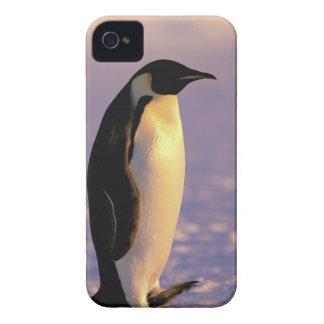Antarctica Australian Antarctic Territory 4 Blackberry Bold Cover