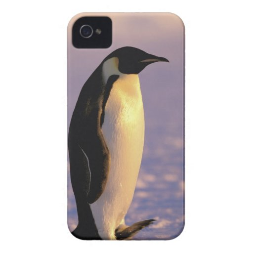 Antarctica, Australian Antarctic Territory, 4 Blackberry Bold Cover