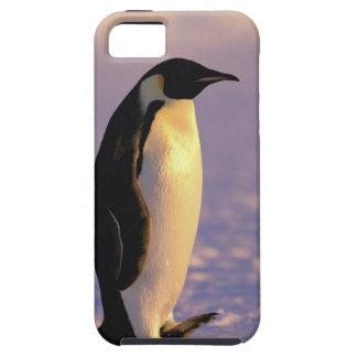Antarctica, Australian Antarctic Territory, 4 iPhone 5 Covers