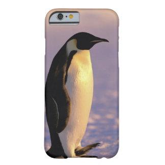 Antarctica Australian Antarctic Territory 4 iPhone 6 Case