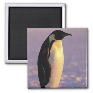 Antarctica, Australian Antarctic Territory, 4 Magnet