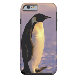Antarctica, Australian Antarctic Territory, 4 Tough iPhone 6 Case