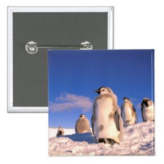Antarctica, Australian Antarctic Territory, 6 15 Cm Square Badge