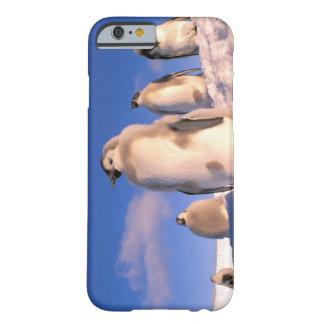 Antarctica, Australian Antarctic Territory, 6 Barely There iPhone 6 Case