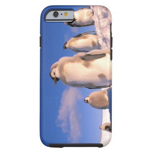 Antarctica, Australian Antarctic Territory, 6 iPhone 6 Case