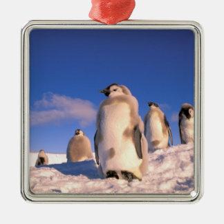 Antarctica Australian Antarctic Territory 6 Christmas Tree Ornaments