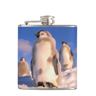 Antarctica, Australian Antarctic Territory, 6 Hip Flask