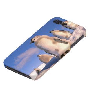 Antarctica, Australian Antarctic Territory, 6 iPhone 4 Covers