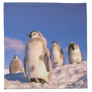 Antarctica, Australian Antarctic Territory, 6 Napkin