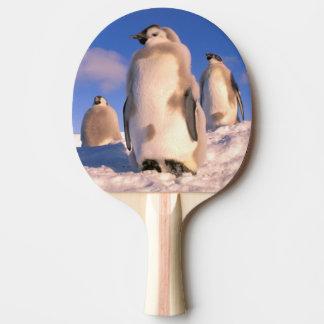 Antarctica, Australian Antarctic Territory, 6 Ping Pong Paddle