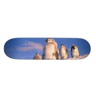 Antarctica, Australian Antarctic Territory, 6 Skateboard Decks