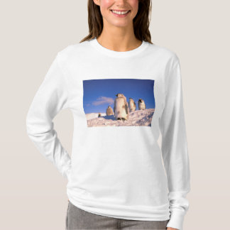 Antarctica, Australian Antarctic Territory, 6 T-Shirt