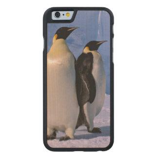 Antarctica, Australian Antarctic Territory, 7 Carved® Maple iPhone 6 Slim Case